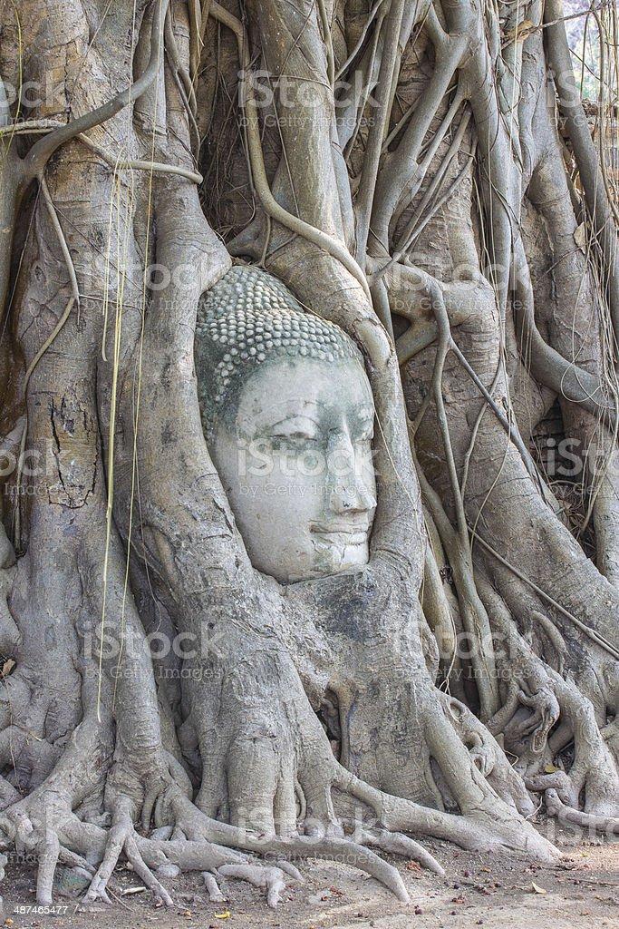Buddha and nature stock photo