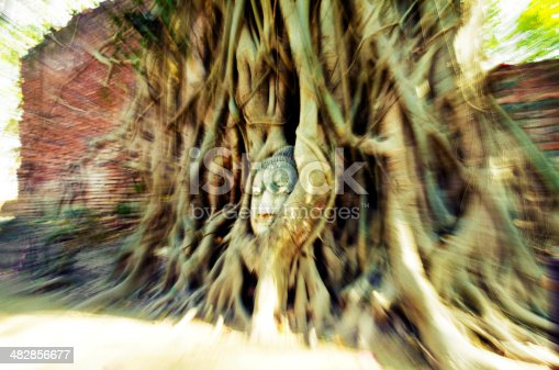 Stone head of Buddha nestled in the tree's roots. Wat Prha, Ayutthaya, Thailand.