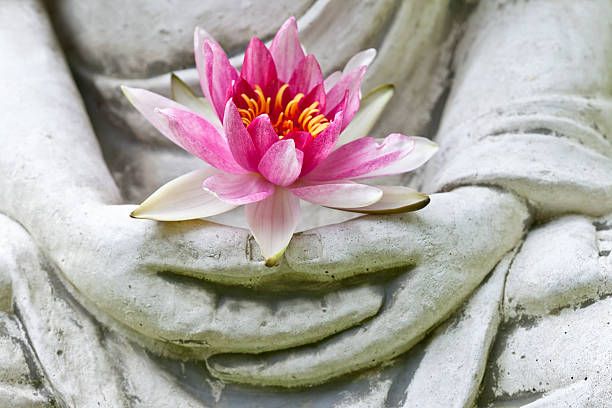 buddha hands holding flower, close up - buddha stockfoto's en -beelden