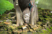 Buddha head at bodhi tree in the temple