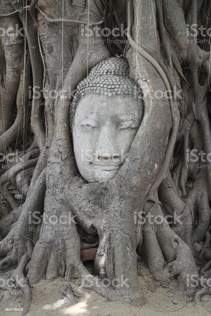 Buddha head at Wat Mahatat in Ayutthaya, Thailand stock photo