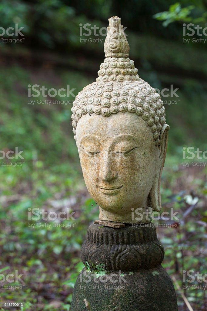 buddha head at wat umong stock photo