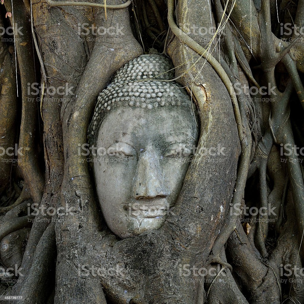 Buddha head embeded in tree roots  ancient city of Ayutthaya stock photo