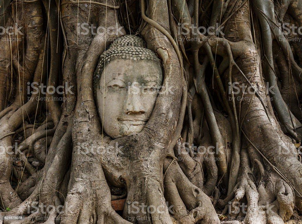 Buddha head in a banyan tree at Ayutthaya photo libre de droits