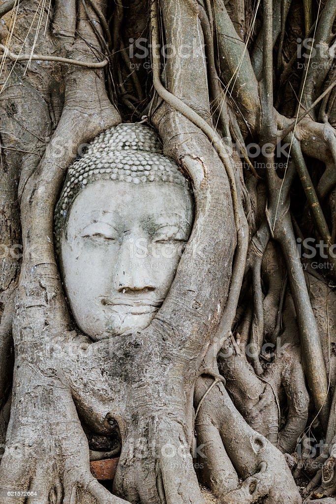 Tête de Bouddha dans un tronc d'arbre, Wat Mahathat photo libre de droits