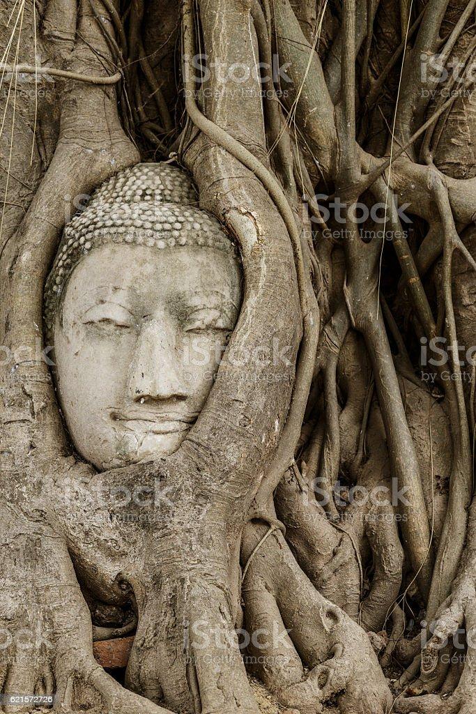 Buddha head in banyan tree at Ayutthaya photo libre de droits