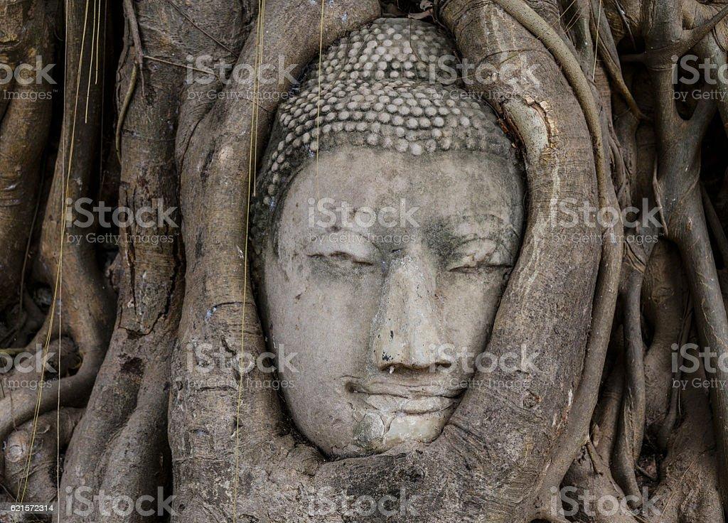 Tête de Bouddha au banyan tree photo libre de droits