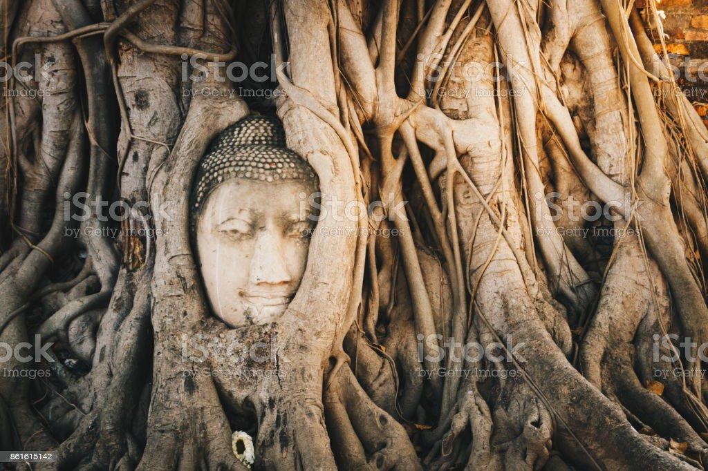 Cabeza de Buda en raíz de bodhi - foto de stock