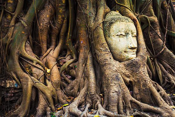 Buddha head im fig tree, Thailand – Foto