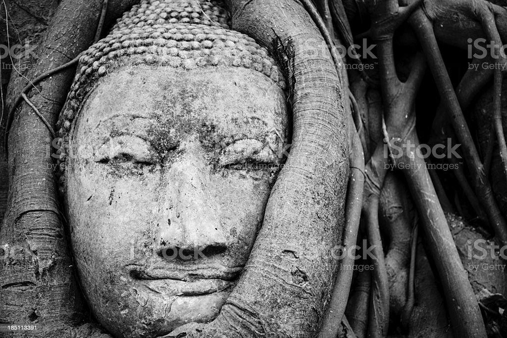 Buddha head in fig tree, Thailand royalty-free stock photo