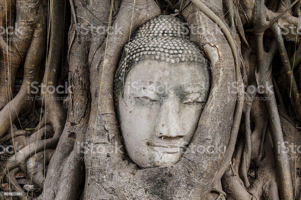 Buddha head in old tree at Ayutthaya photo libre de droits