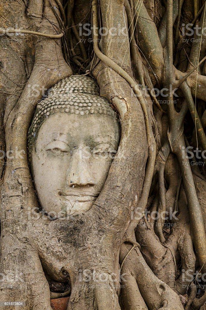 Tête de Bouddha dans le vieil arbre photo libre de droits