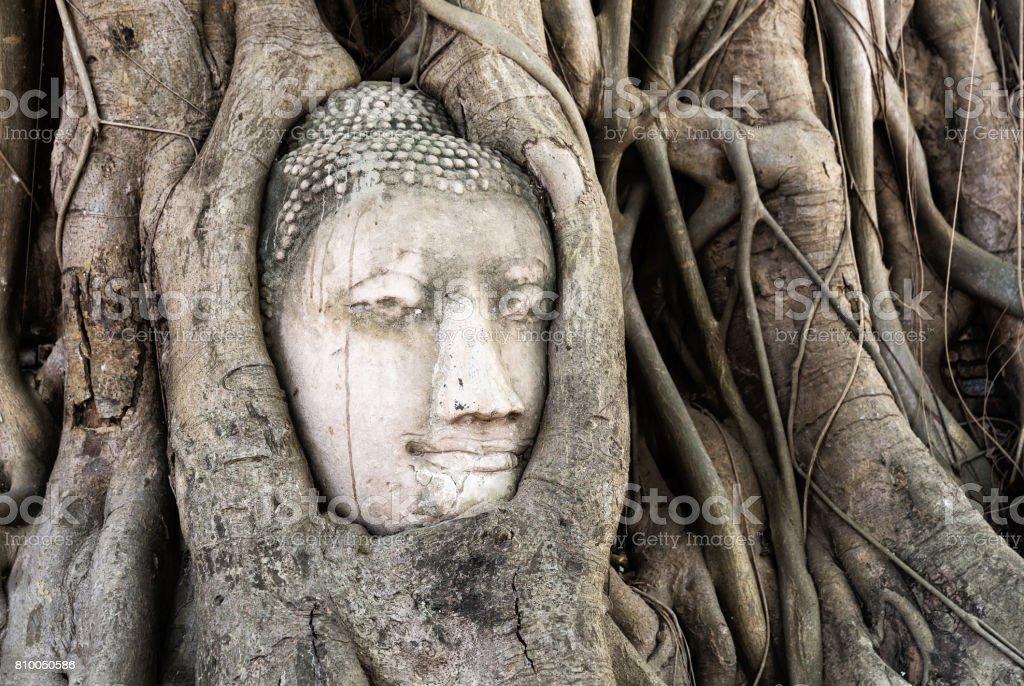 Buddha head in root tree at Wat Mahathat. Ayutthaya stock photo