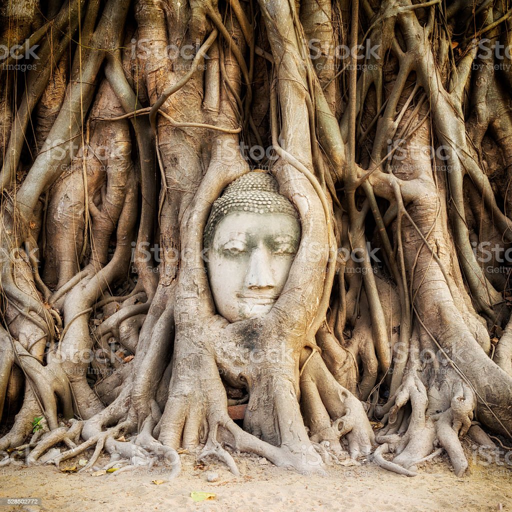 Buddha Head in the Tree Roots, Ayutthaya, Thailand stock photo