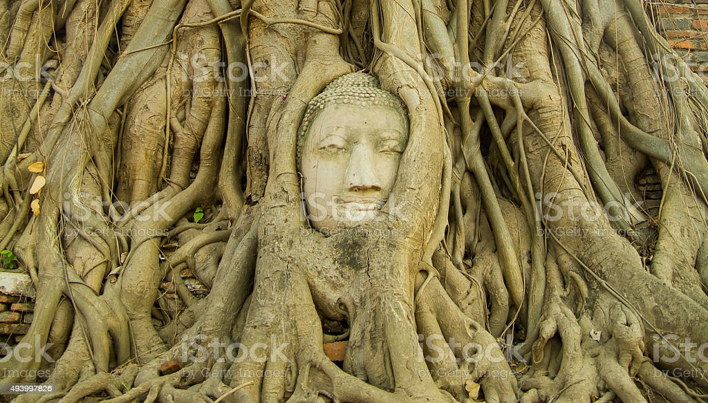 Buddha head in tree from the front stock photo
