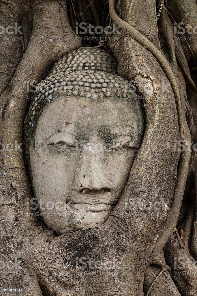 Tête de Bouddha en arbre  photo libre de droits