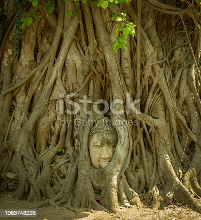 Buddha head in tree roots in ancient capital of Siam - Ayutthaya, Thailand, front view