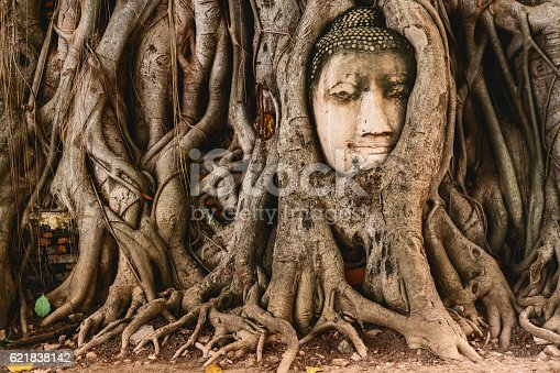 Buddha head in tree roots in the ruined ancient Buddhist temple in Ayutthaya, Thailand