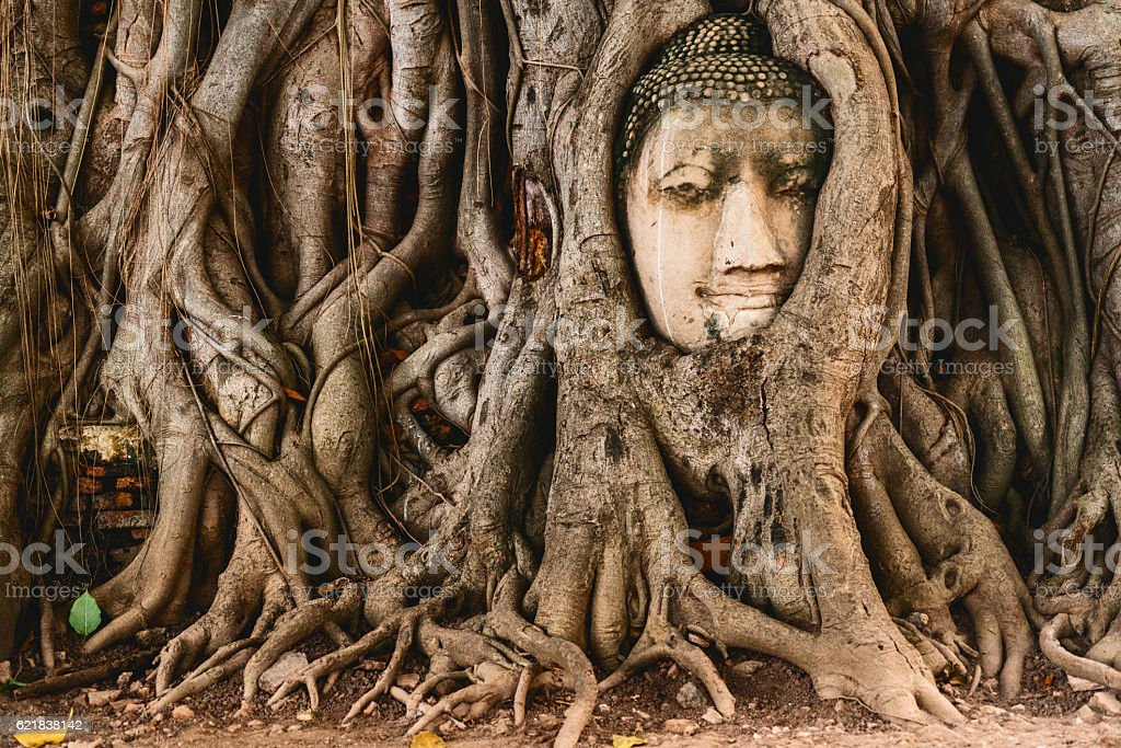 Buddha head in tree roots in the ruined ancient temple​​​ foto