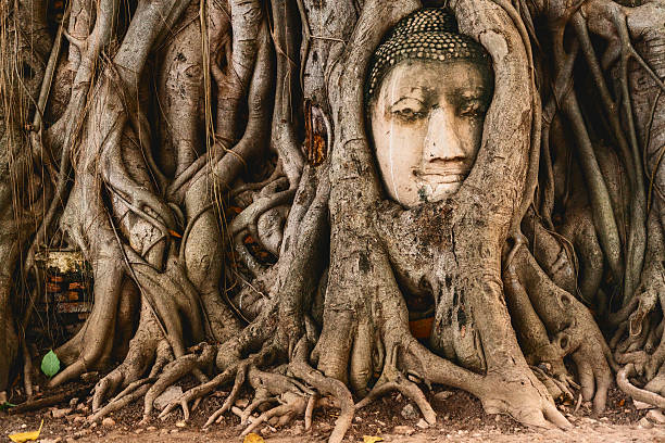 buddha head in tree roots in the ruined ancient temple - 仏陀 ストックフォトと画像