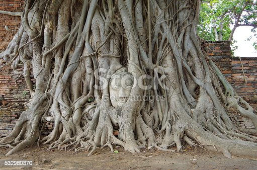 Head of stone buddha in tree roots at wat mahathat temple, Ayutthaya, Thailand