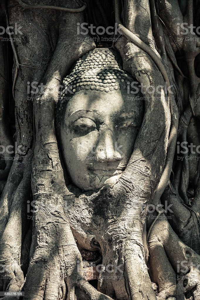 Buddha Head in Tree Roots, Thailand. royalty-free stock photo