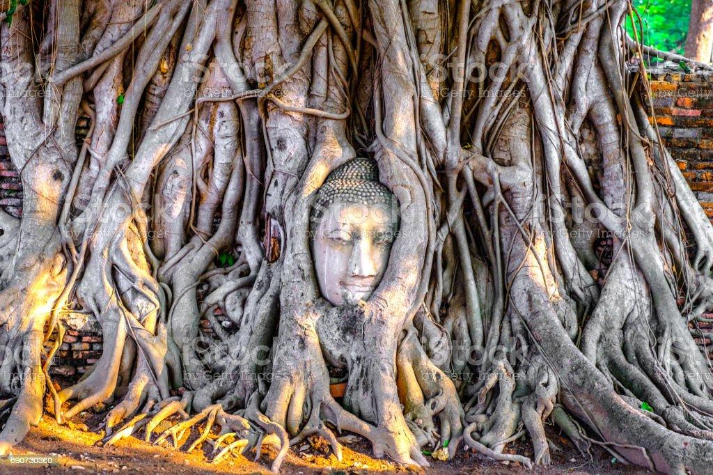 Tête de Bouddha dans le temple de Wat Mahathat, des racines d