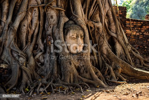 The head of a sandstone Buddha statue nestled in the tree roots beside the minor chapels of Wat Mahathat, Phra Nakhon Si Ayutthaya Province, Thailand. The temple is one of the most popular and photographic attractions in the UNESCO World Heritage Site of Ayutthaya, an ancient capital of Siam.