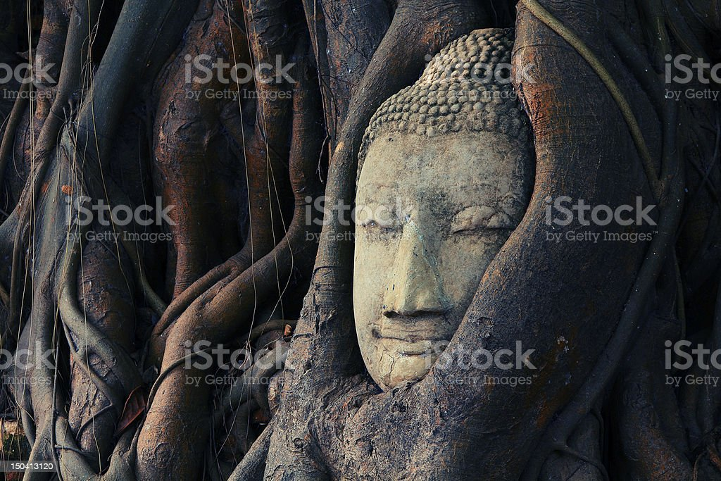Buddha head royalty-free stock photo