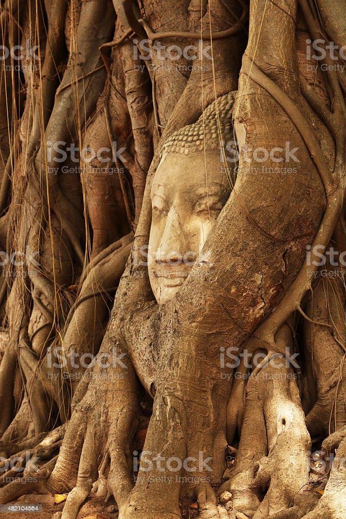 Buda de cabeza - foto de stock