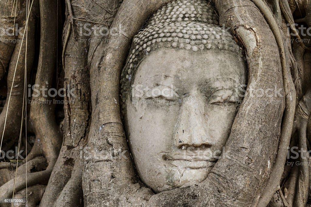 Buddha head statue in old tree photo libre de droits