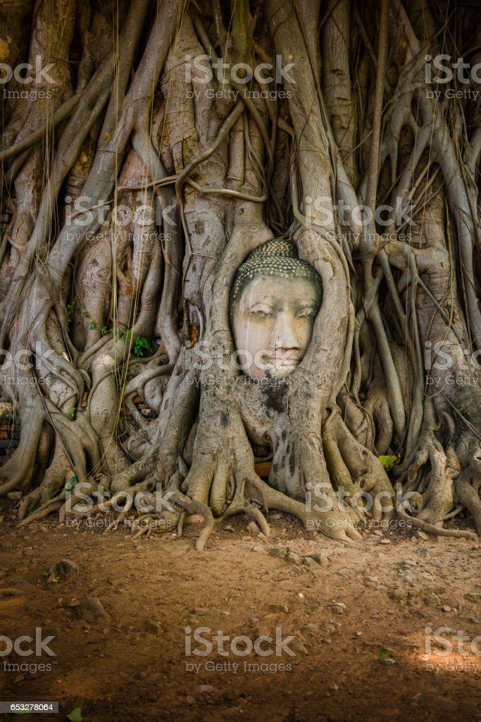 Buddha Head Tree Wat Maha That (Ayutthaya) stock photo