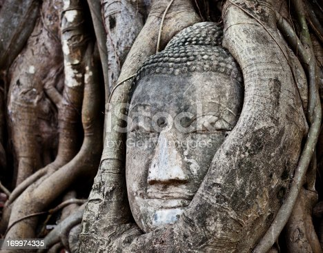 An Ancient Head Of The Buddha Wrapped In Tree Roots From Wat Phra Mahathat, Ayutthaya, Thailand.