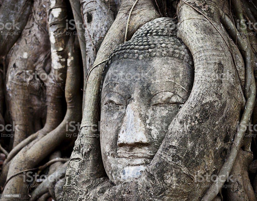 Buda envueltas en un árbol de - foto de stock
