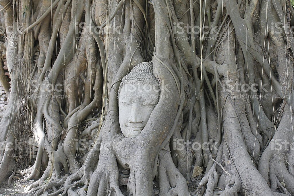 Buddha in roots stock photo