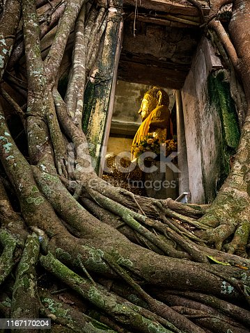 Old Buddha statue in window frame of tree root at Wat Kai Bang Kung temple at Amphawa, Samut Songkram province, Thailand. Amazing and famous place in Amphawa. Popular for Tourism.