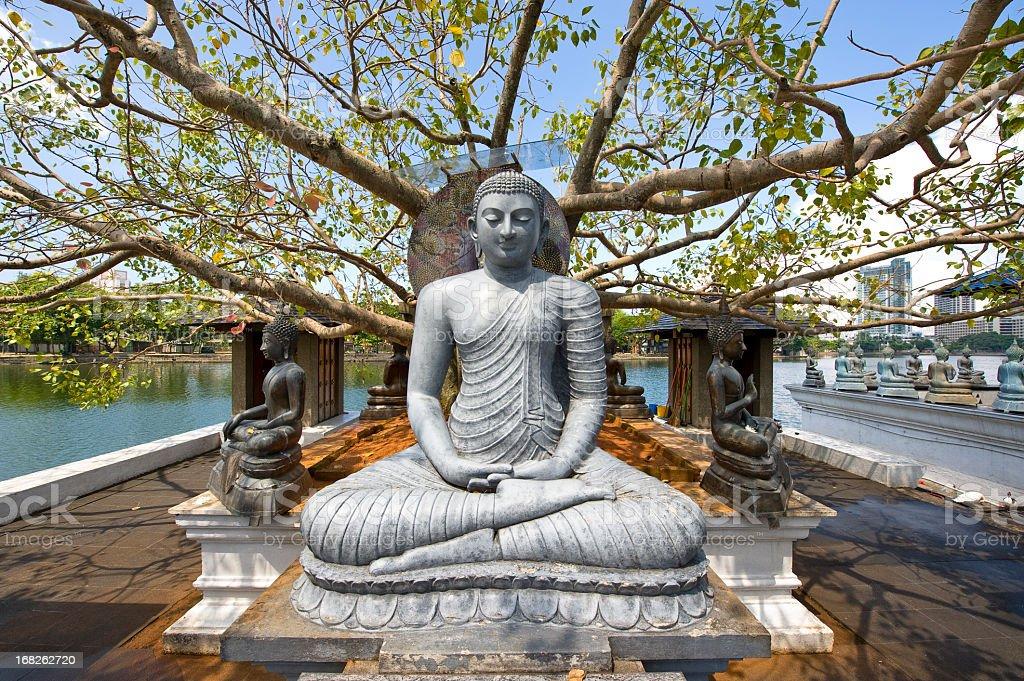 Buddha statue under big tree stock photo