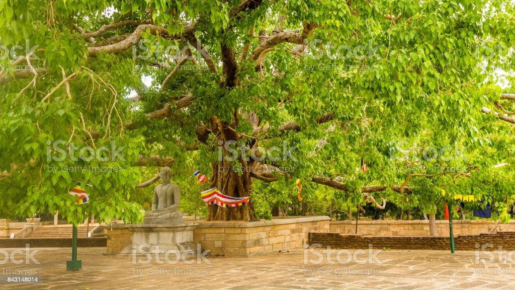 Statue de Bouddha sous l'arbre de la bodhi à la Jetavanarama Dagoba, le plus grand stupa à Anuradhapura, Sri Lanka. - Photo