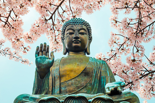 Buddha statue with cherry blossom in Po Lin Monastery, Hong Kong