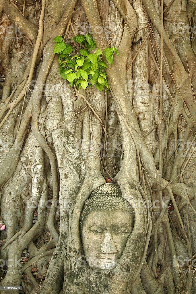 buddhas head banyan tree ayuthaya thailand royalty-free stock photo