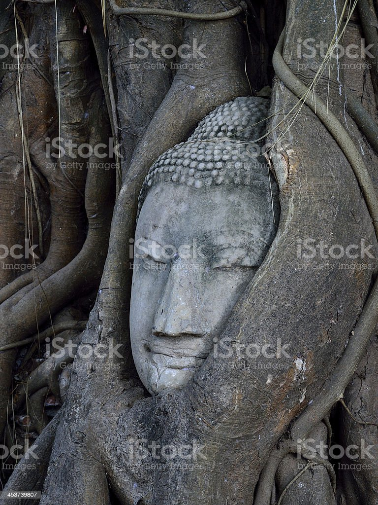 Buddha's head embeded in tree roots Ayuttha Thailand stock photo