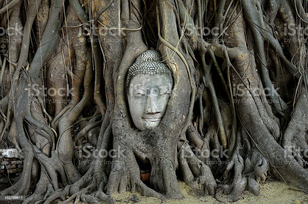 Buddha's head embeded in tree roots, ayutthaya stock photo