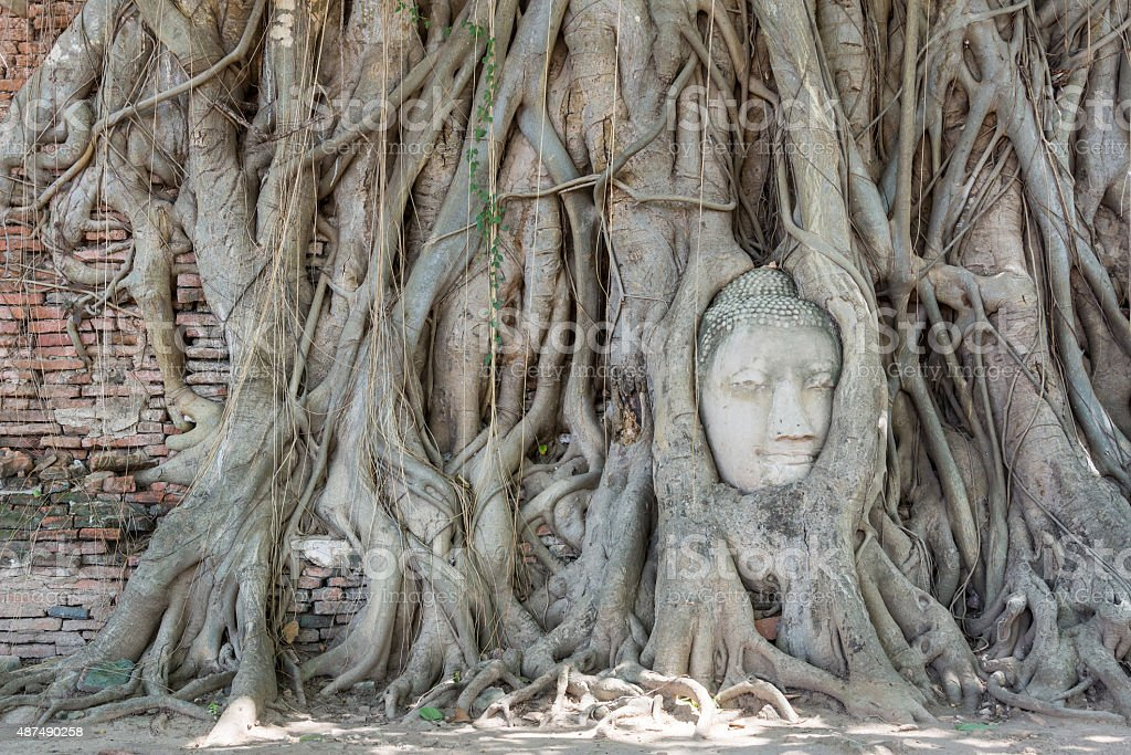 Buddha's Head in Tree Roots at mahathat temple in thailand stock photo