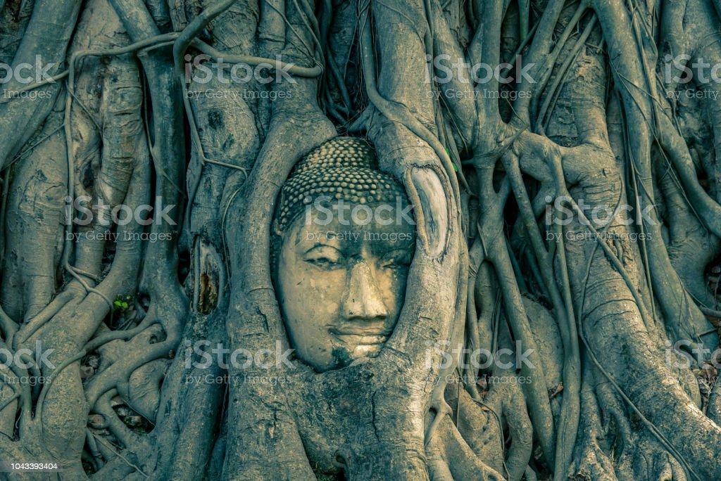 Buddha's head in tree roots at Wat Mahathat,Phra Nakorn Sri Ayutthaya,Thailand. stock photo