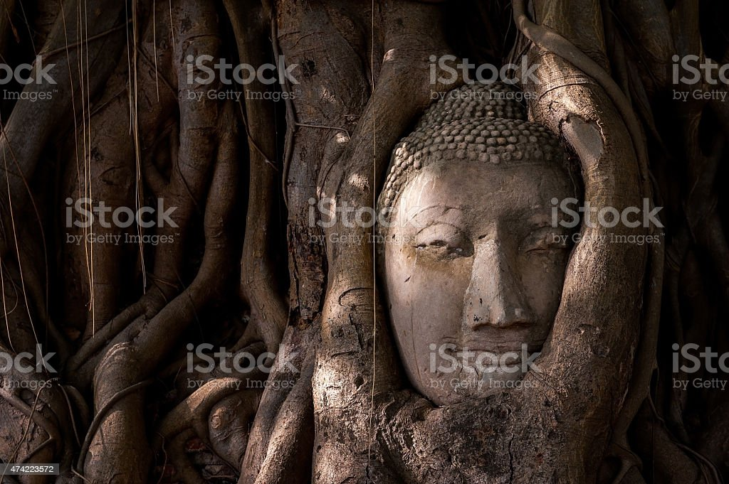 Buddha's head in tree roots stock photo