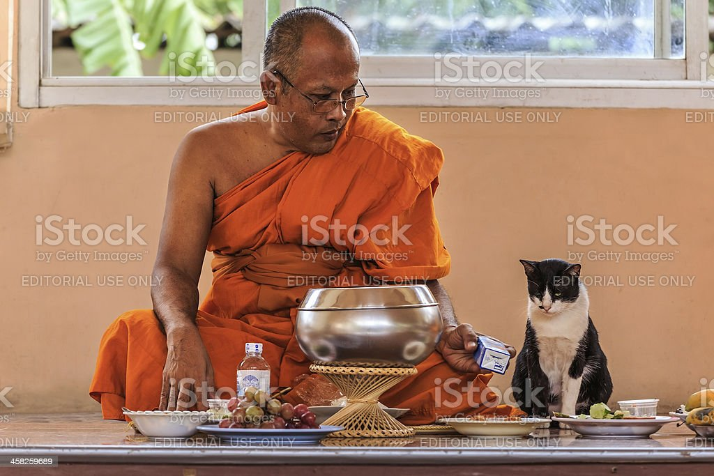Buddhist monk offers cat his box of milk royalty-free stock photo