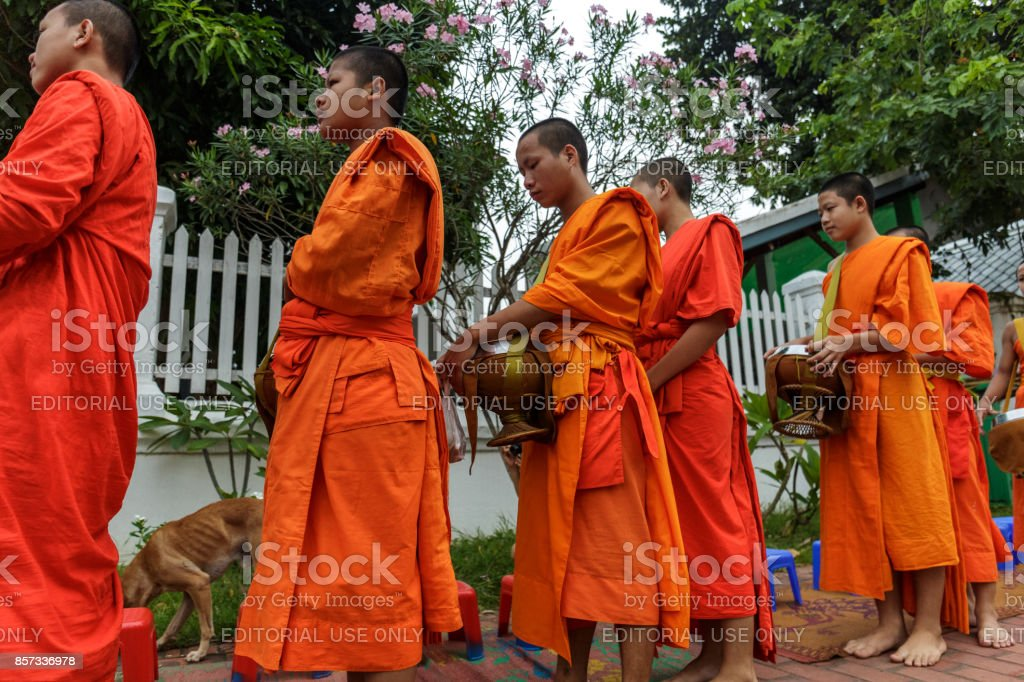 Buddhist monks collect alms in Luang Prabang, Laos stock photo