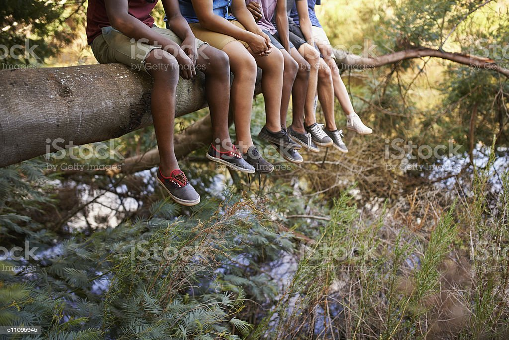 Buddies on a branch stock photo