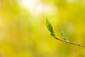 Plant, Bud, Springtime, Tree, Leaf