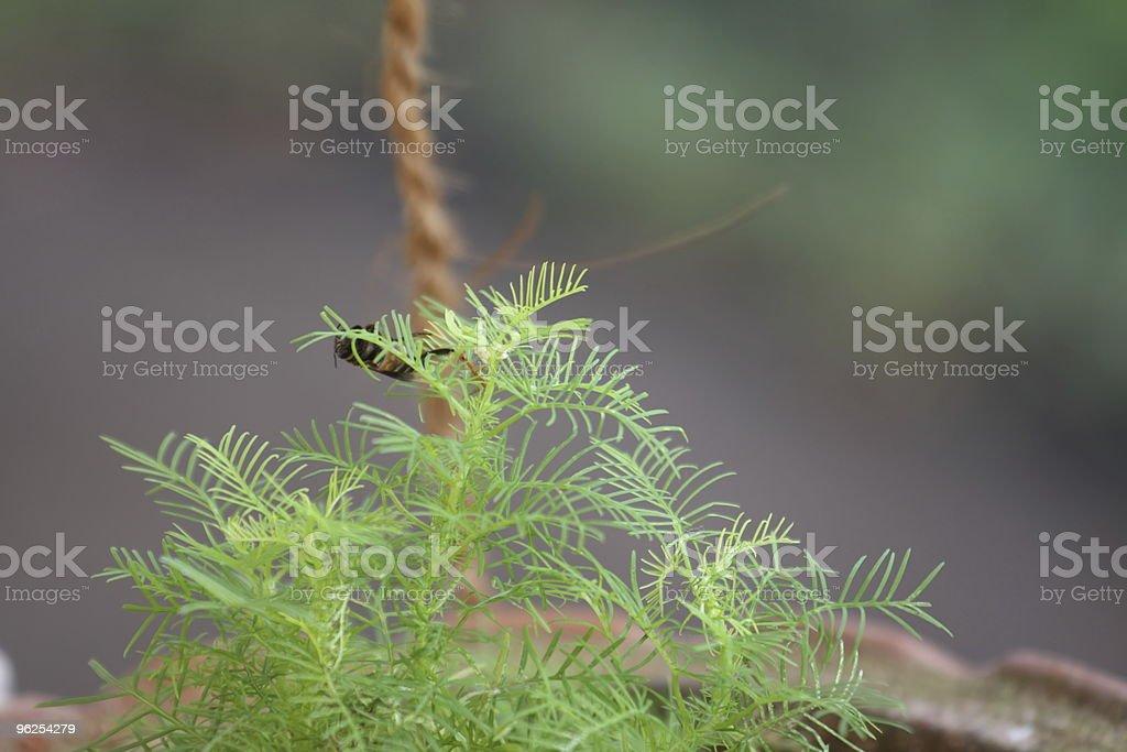 Os amantes de plantas - Foto de stock de Animal royalty-free